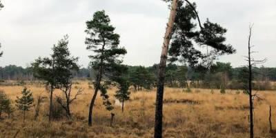 Een avontuurlijke wandeling in Noord-Brabant
